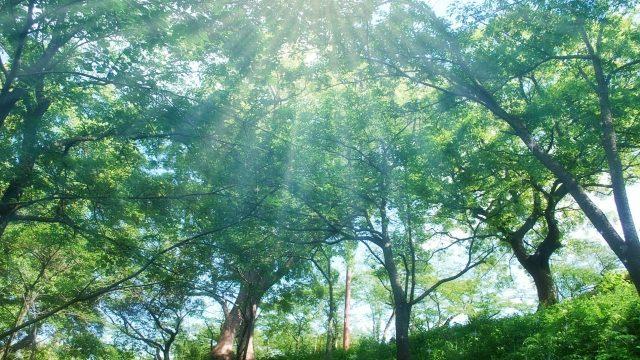 森林浴のイメージ写真