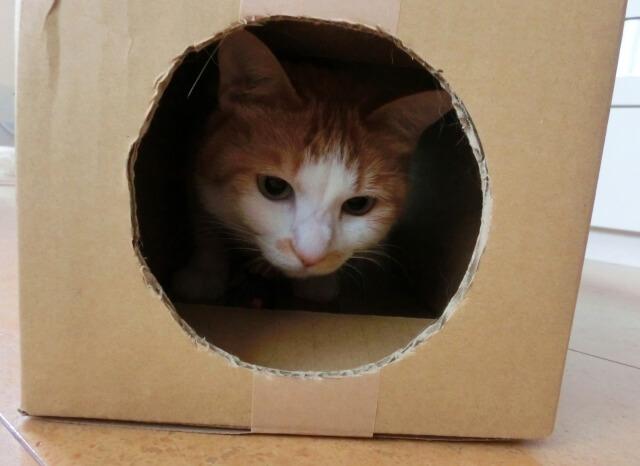 小屋から出てこない猫