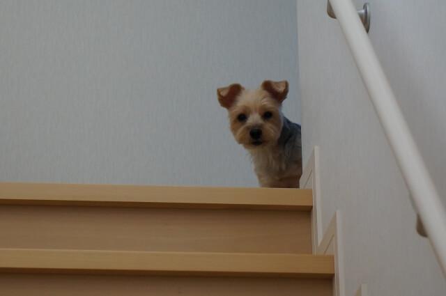 留守番している犬